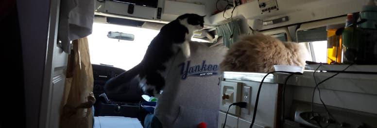 RV in Cats
