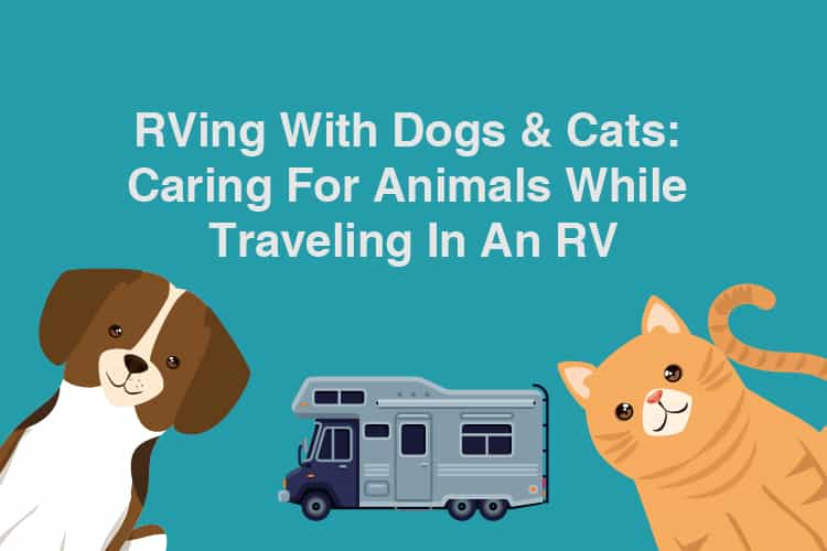 RVing With Dogs & Cats: Caring For Animals While Traveling In An RV