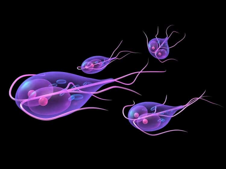 water filters and giardia