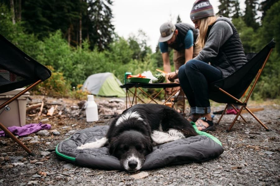 Camping With Dog