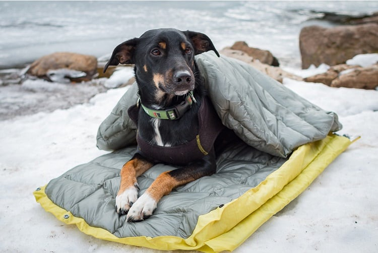 Hammock Camping With Your Dog A Complete Guide Kempoo Com