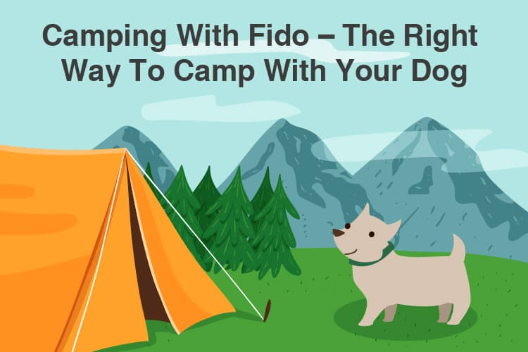Camping With Fido – The Right Way To Camp With Your Dog 13