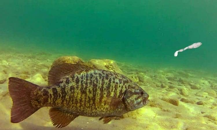 Smallmouth Fishing During The Early Season