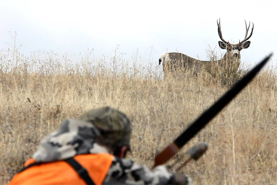 Deer Hunting Different