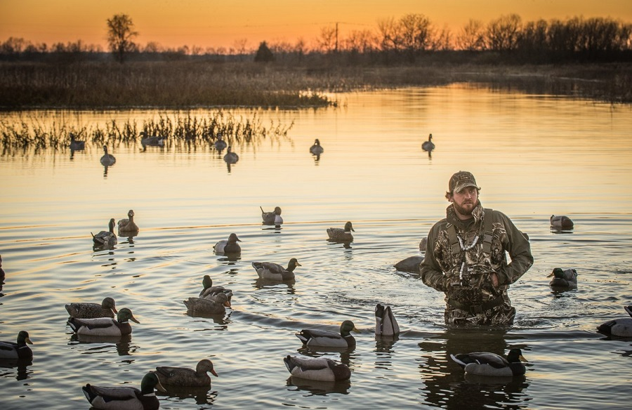 Duck Hunting vs Other Waterfowls
