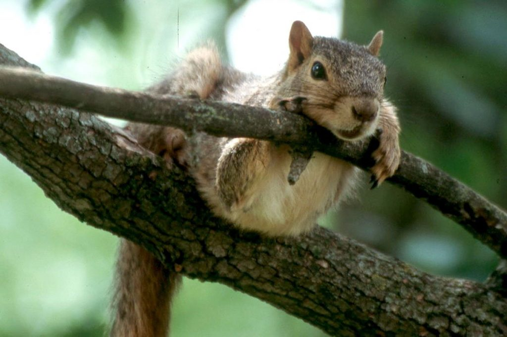 WHAT IS THE POINT OF SQUIRREL HUNTING?