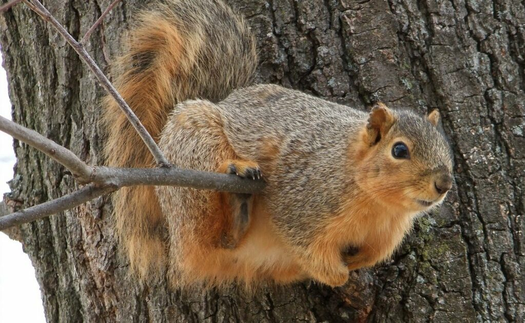 Squirrel Hunting how