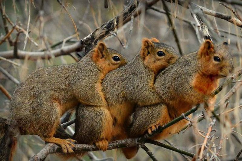 Where can you find squirrel