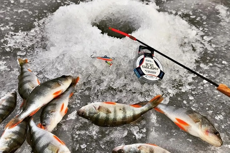 light rods for ice fishing